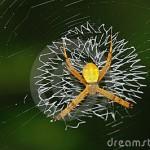spider-on-web-thumb18571343